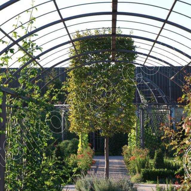 Кованая арка для цветов
